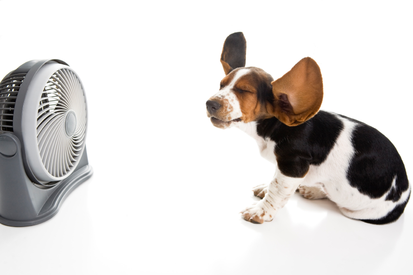10 Ways to Save on Your Cooling Bill
